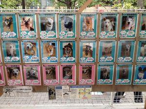 水天宮仮宮の犬の写真
